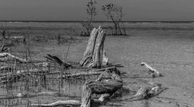 Pete Berwick: Island